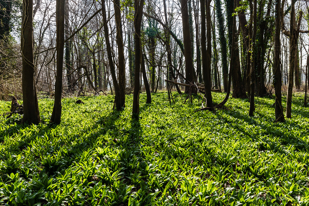Spring Greens
