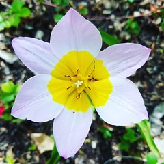 #abqbiopark #botanical #garden #flower #spring #nature