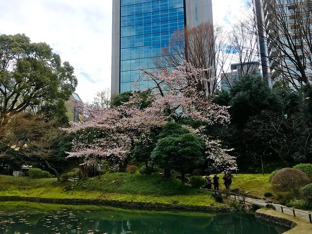 Photo:サクラ By yuki_alm_misa