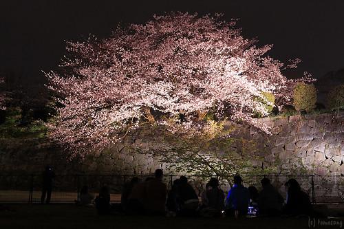 Sakura Festival 2016