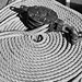 Rope on a deck