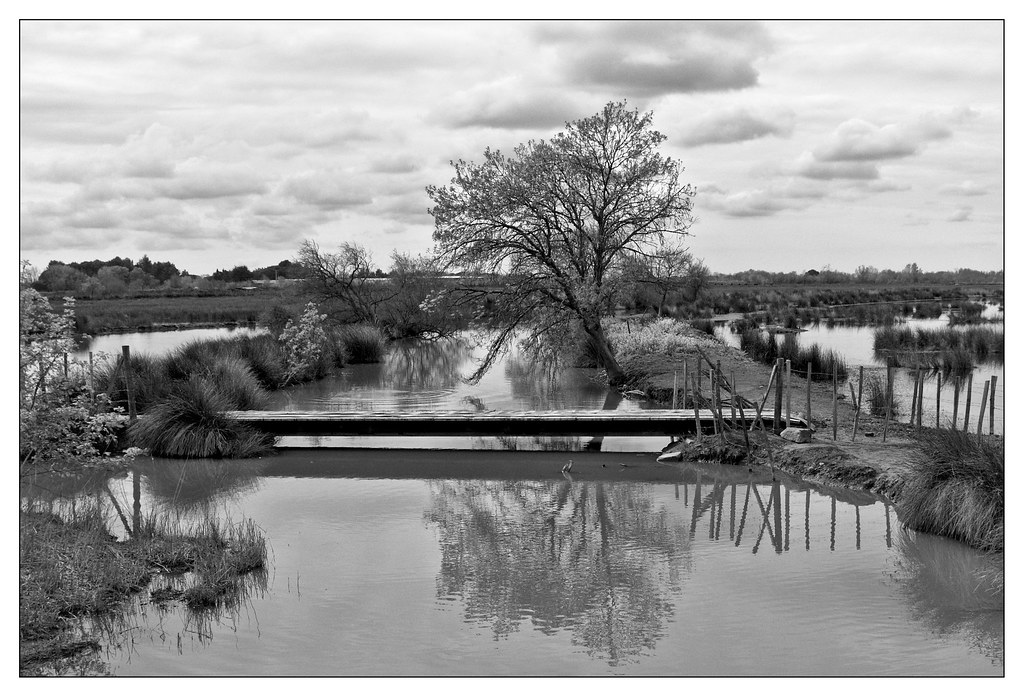 Au milieu coule une rivière