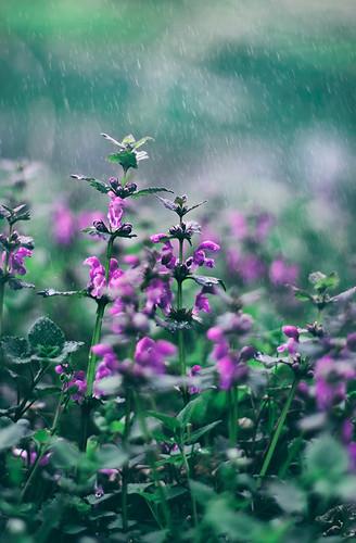 Im Frühling ist es keine besondere Kunst, den Pflanzen beim Wachsen zuzusehen.