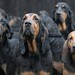 The East Anglian Bloodhounds [Explored] by Nicola Riley