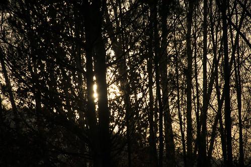 Bosque de siluetas