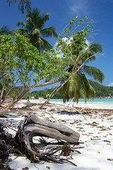 Praslin Island, Seychelles - 100_2401