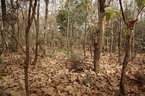 burkinafaso nature africa forest unep unenvironment