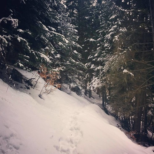 A walk through the woods. 💖 #hiking #skiholiday #alpedhuez #ozenoisans