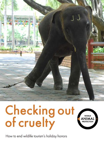 Checking out of cruelty - World Animal Protection