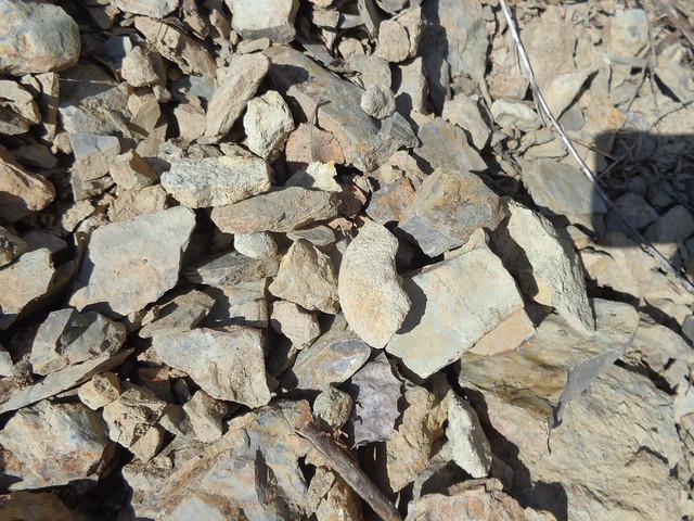 Ammonite fragment (as found)
