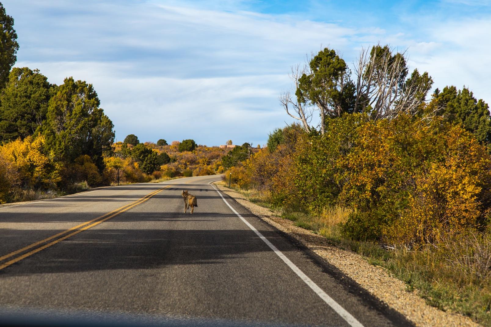 Mesa Verde-7208