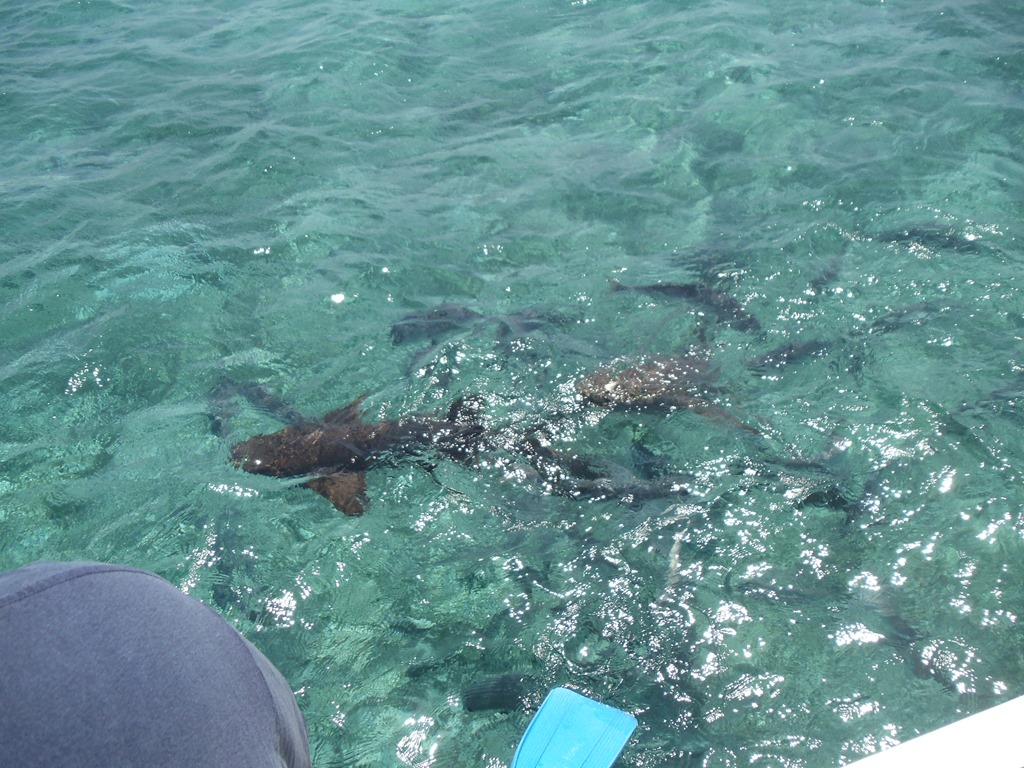 Shark Alley Belize