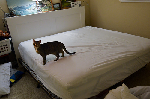 Dizzy loves making the bed.