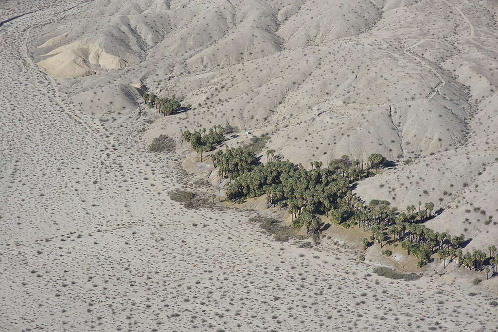 Willis Palms and the Banning Fault, Indio Hills, Coachella Valley, California