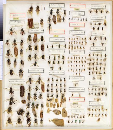A.G. Dahlbom Hymenoptera 1