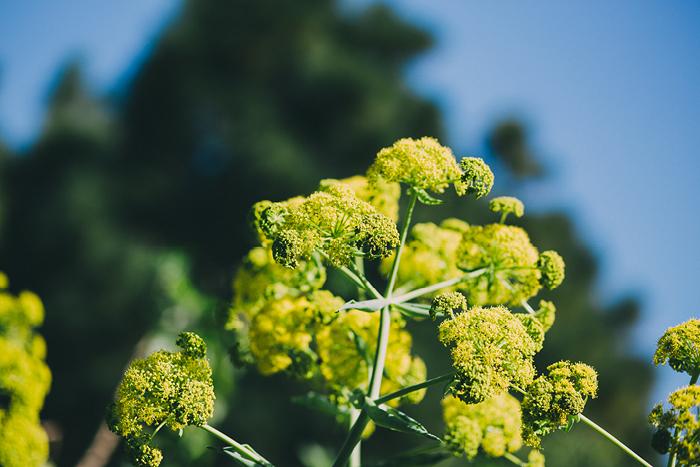 san_botanic17