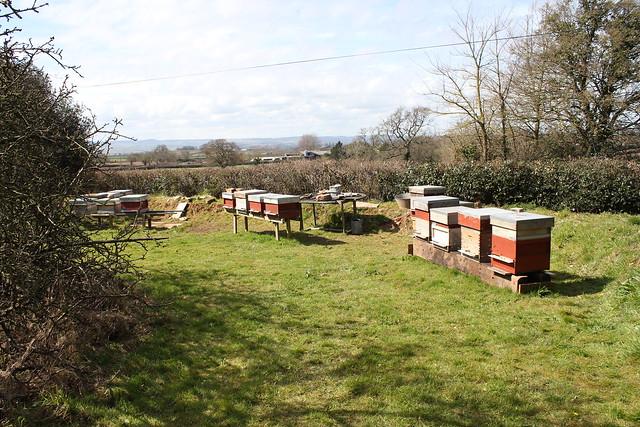 Practical Beekeeping - Beginners
