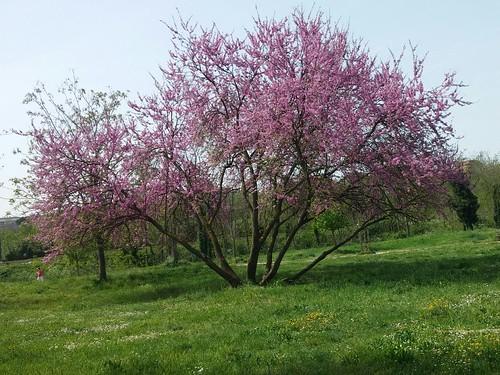 scoppia la Primavera