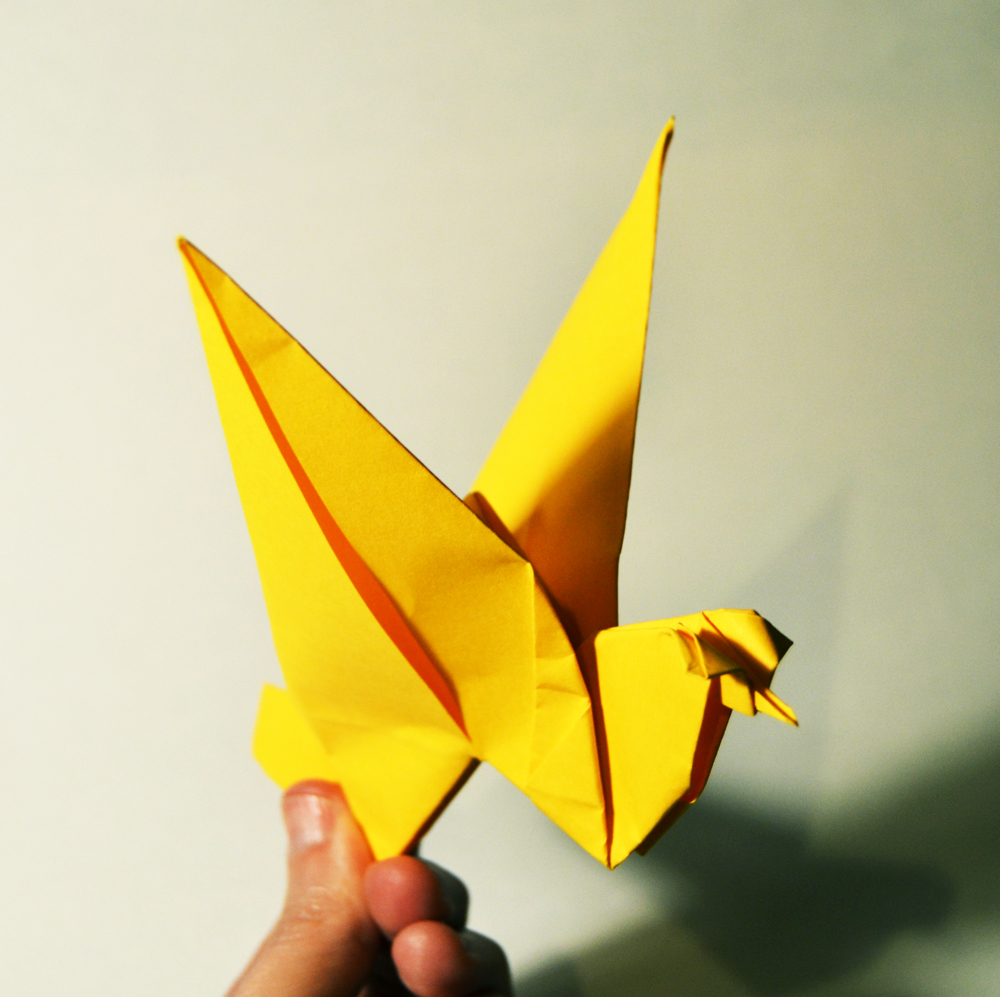 207-pássaro
