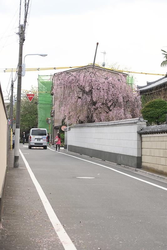 東京路地裏散歩 2016年4月9日