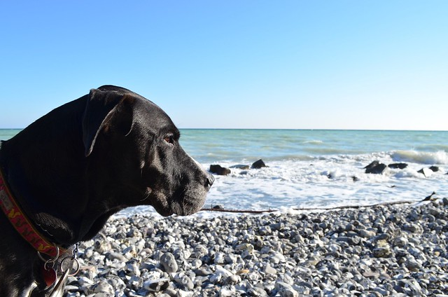 Bailey dog watching the sea on beach on Rügen at Jasmund Nationalpark