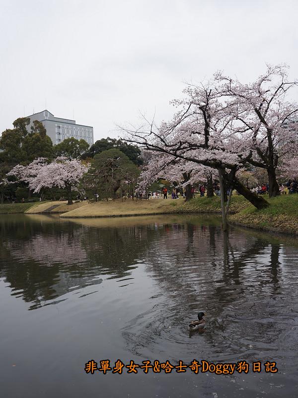 日本自由行小石川後樂園&東京巨蛋城10
