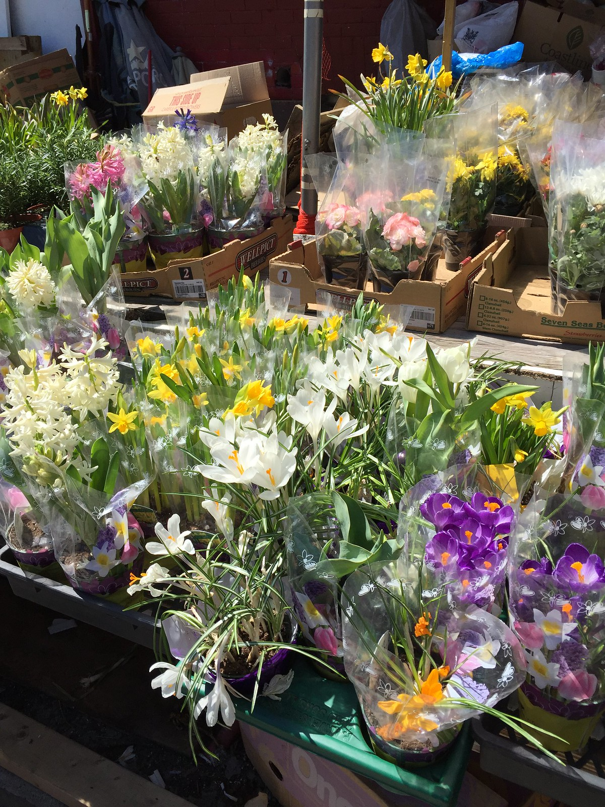 spring flowers at Kensington Market