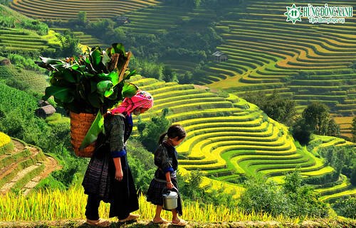 Du lịch Hà Nội- Yên Tử- Du thuyền Hạ Long- Sapa -  nương rẫy của người dân tộc