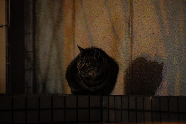 Today's Cat@2016-01-06