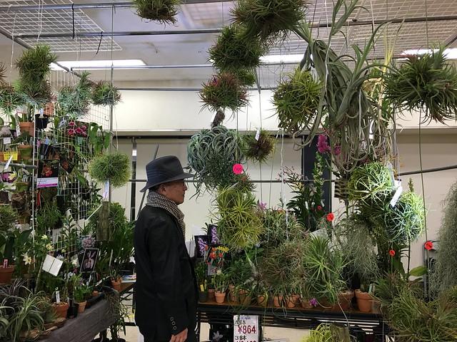 2016/01/07 サンシャインらん展 はちのへ洋らん園