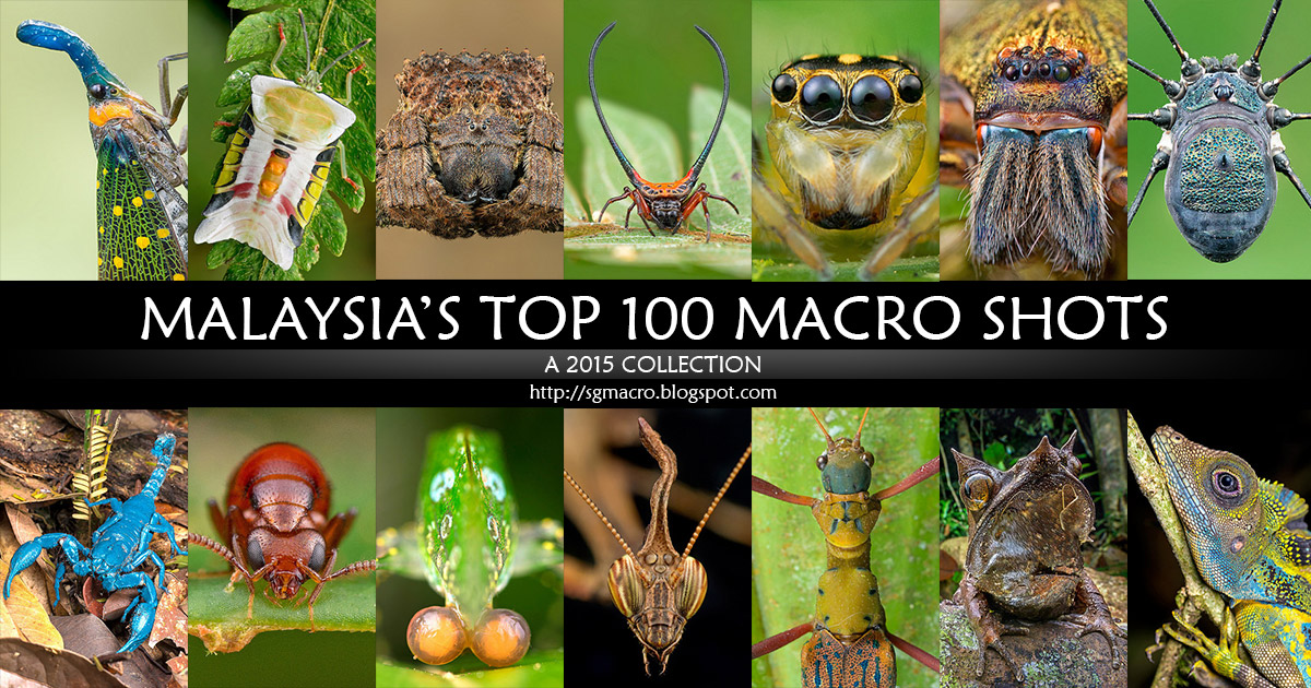 Malaysia's Top 100 Macro Shots from 2015