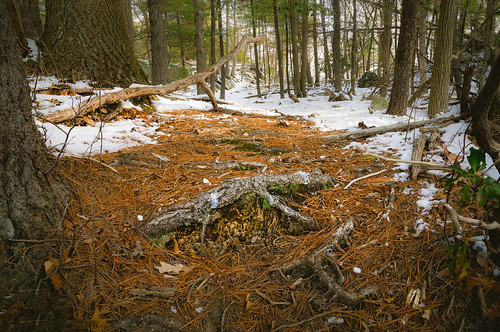 wideangle landscape winter plants nature harrimanpark city 2016 weather snow trees leaves pine pineneedles harrimanstatepark lowangle frozen hiking sunrise harriman morninglight unitedstates morning newyork ice southfields us forestfloor
