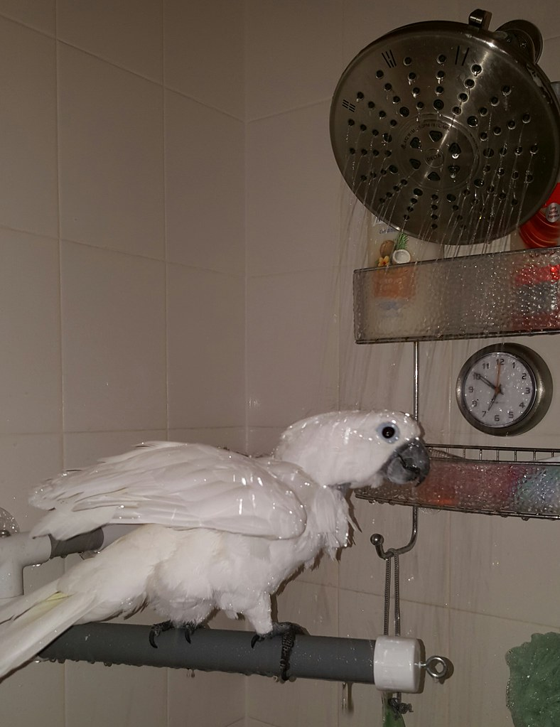 Angel Taking a Shower