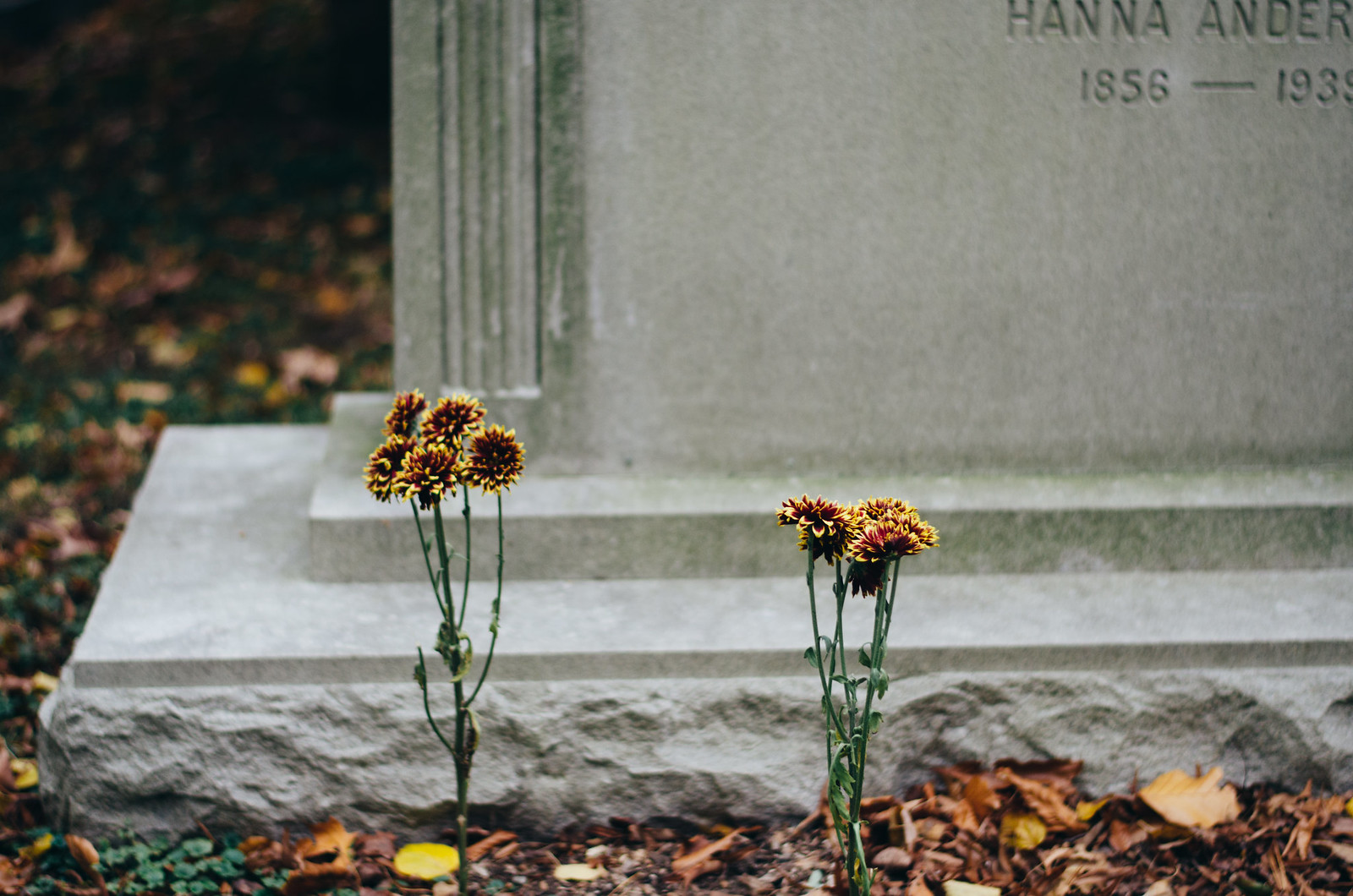 Flowers and Gravestones on juliettelaura.blogspot.com