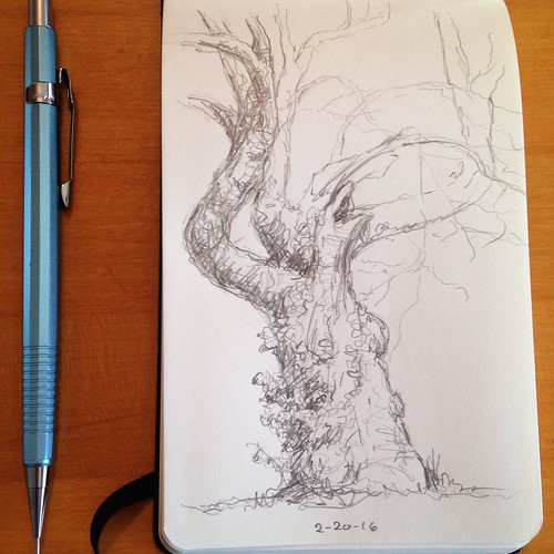 Sketching the gnarly redbud tree next door.