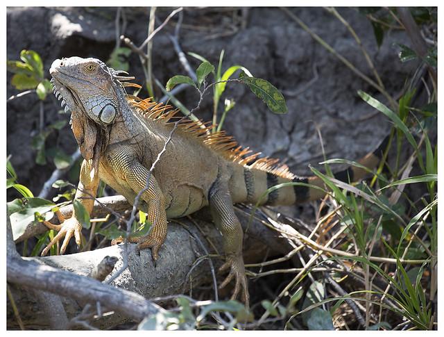 2016-02-16 Rl Viejo Wetlands 10