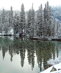 Yosemite Reflections, Tioga Lake 5-15