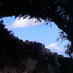 Ikaria's remotest hinterland 07 - trees at trail 4