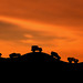 Little Safari by David TAPIN Photographie