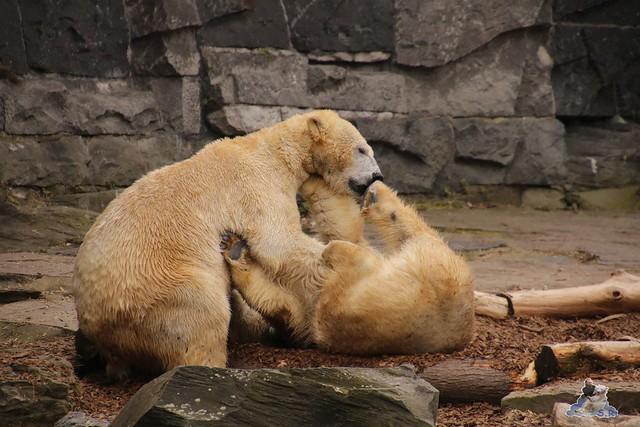 Tierpark Berlin 13.03.2016  0217