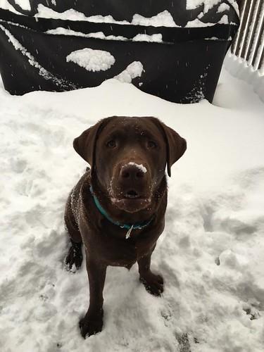 H.Snow dog