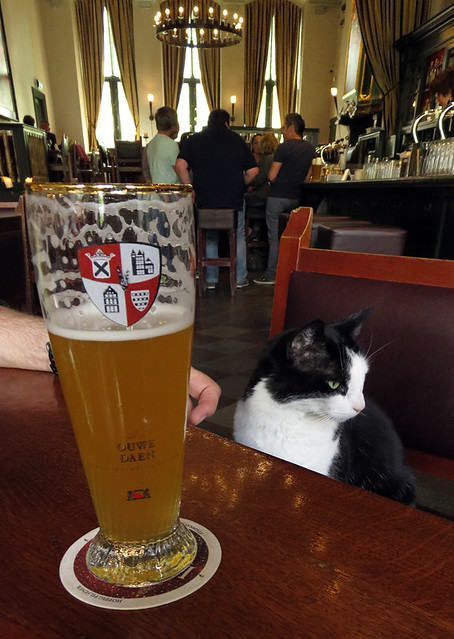 Having a beer with the bar cat at the Stadkasteel Brewery in Utrecht, Holland