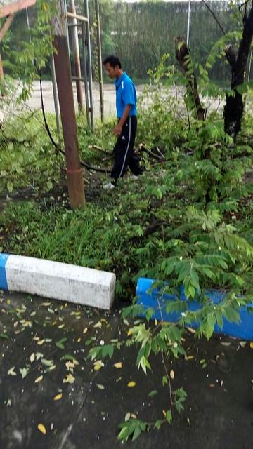Rabas pepohonan di KPU Kab.Tulungagung(8/4)