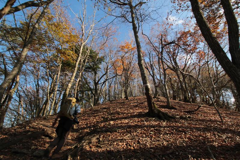 20141122-武奈ヶ岳&京都ライトアップ-0117.jpg