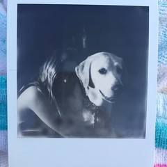 Brought the sx-70 tonight, b&w #impossibleproject