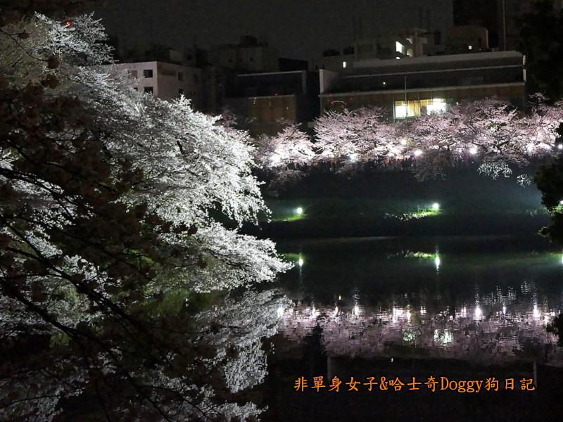 日本東京北之丸公園千鳥之淵賞夜櫻花05