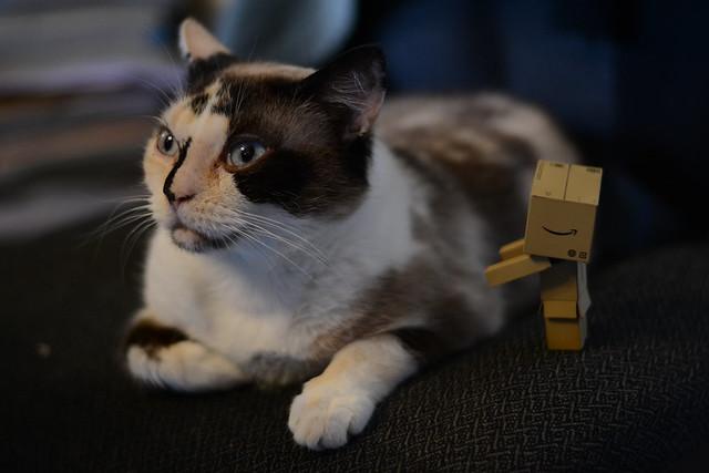 [Galerie commune] Danboard - Vos photos du petit robot en carton 24048233125_d9fc6872a1_z