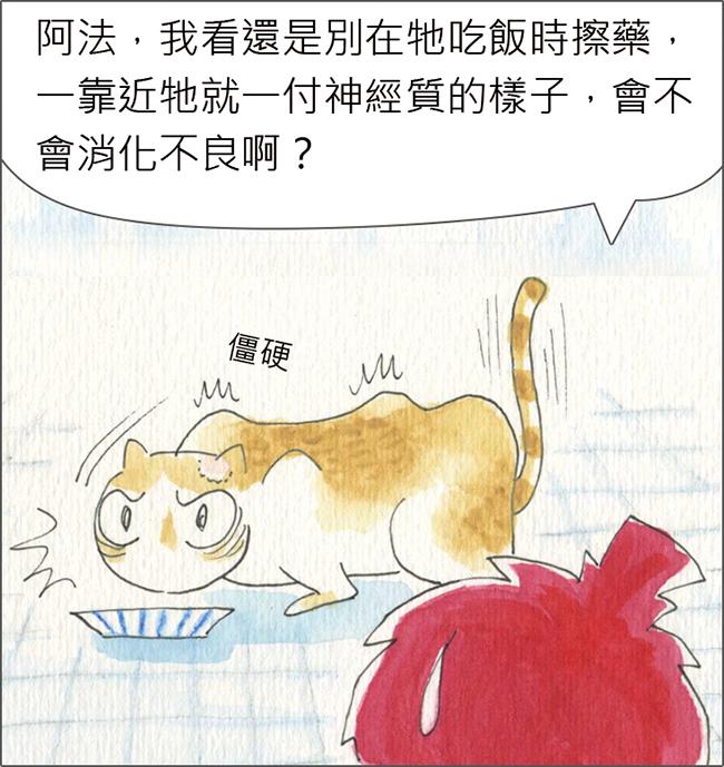 家裡來了一隻貓 為吃罐頭忍住