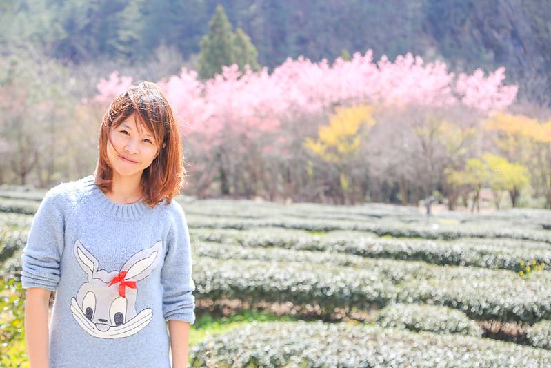 2016武陵賞櫻花