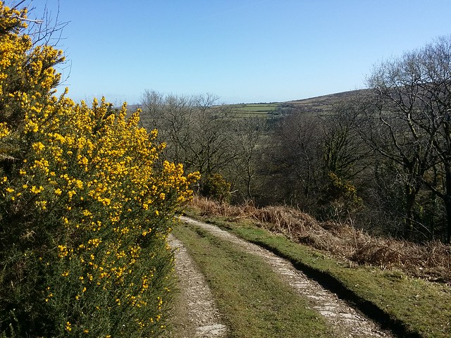 Heavy scent of gorse, just like coconut today!